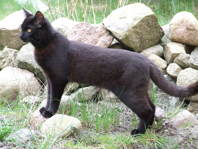 Katze im Hinterhof