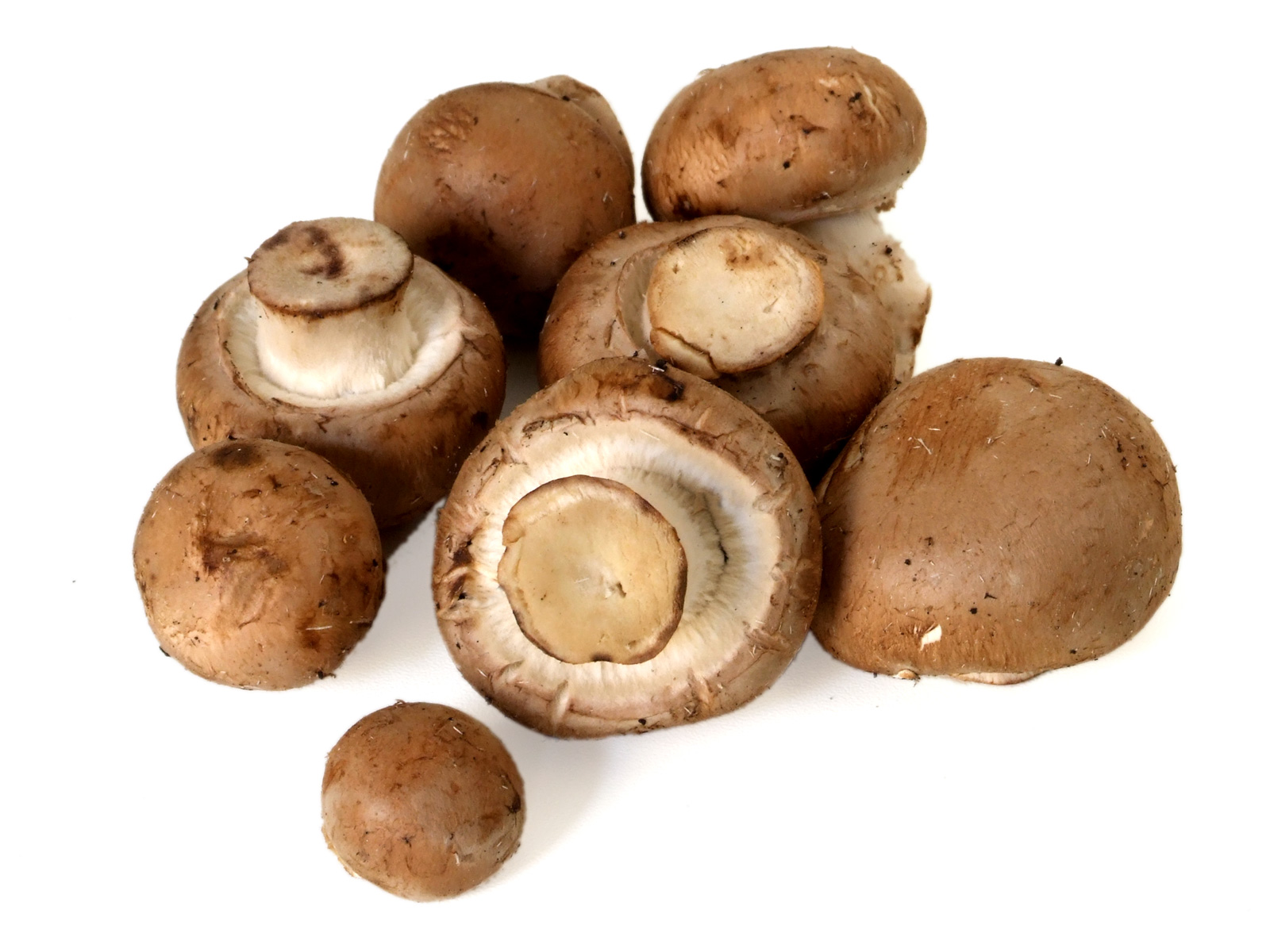 braun champignons pilze