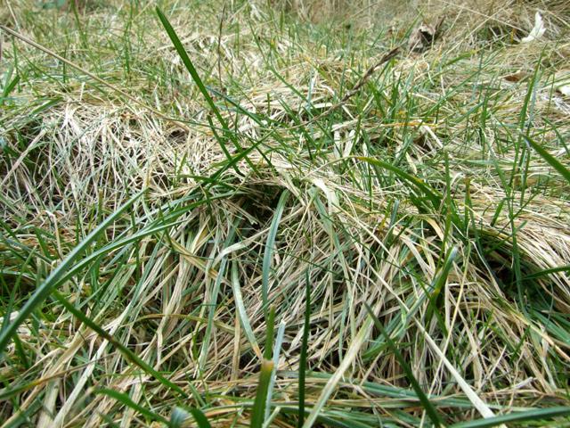 Strubbeliger Rasen