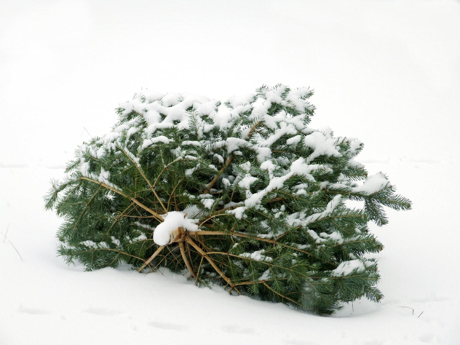 gestern gab es hier schneegest ber putzlowitscher zeitung. Black Bedroom Furniture Sets. Home Design Ideas