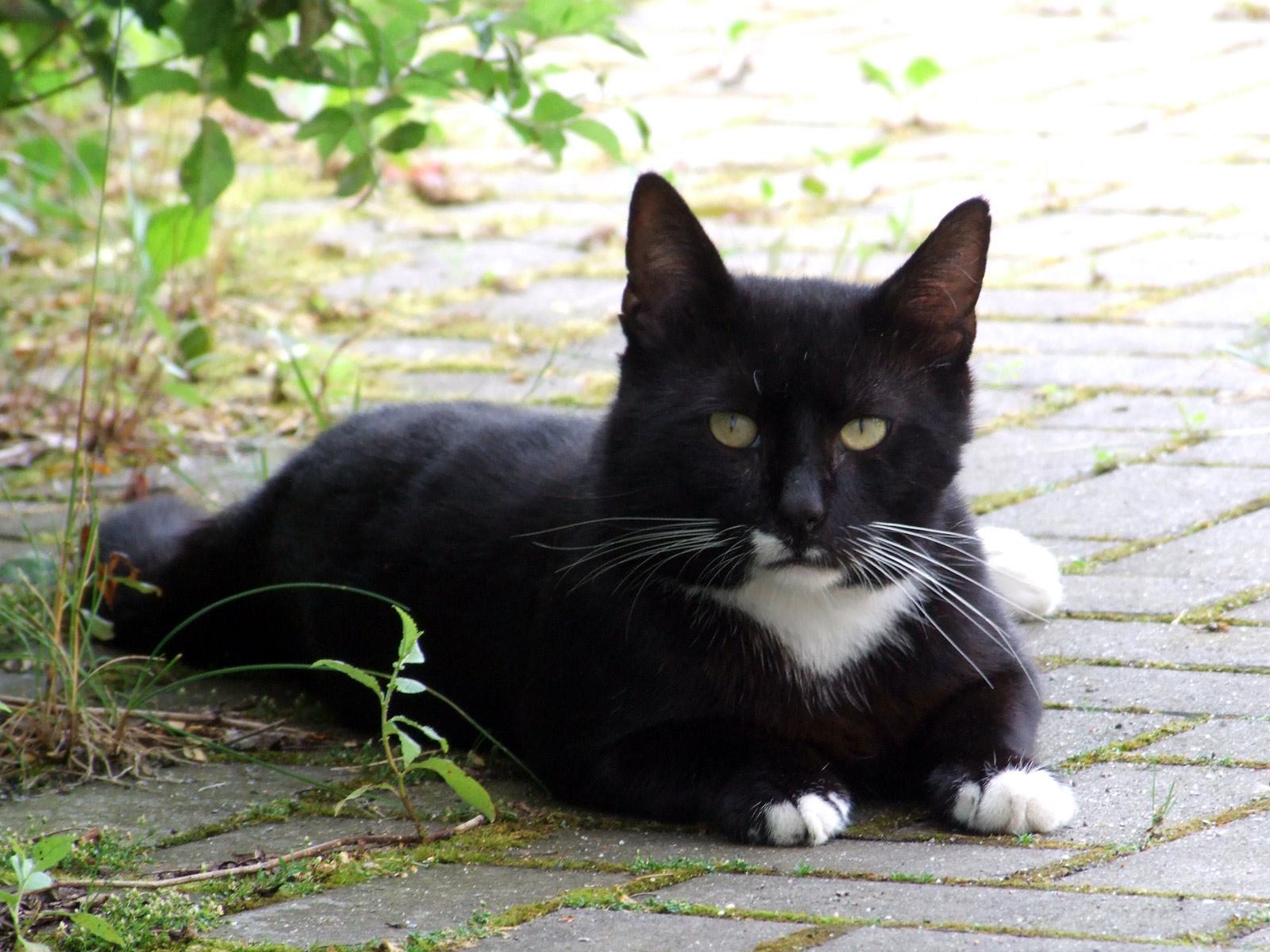 mehr katzen aber keine meerkatzen putzlowitscher zeitung. Black Bedroom Furniture Sets. Home Design Ideas