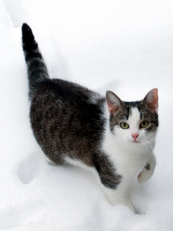 Simsalaseo Katze