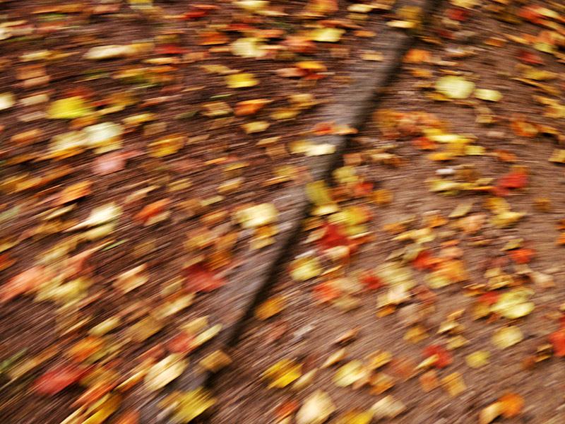 Herbst – Bunte Blätter auf dem Weg