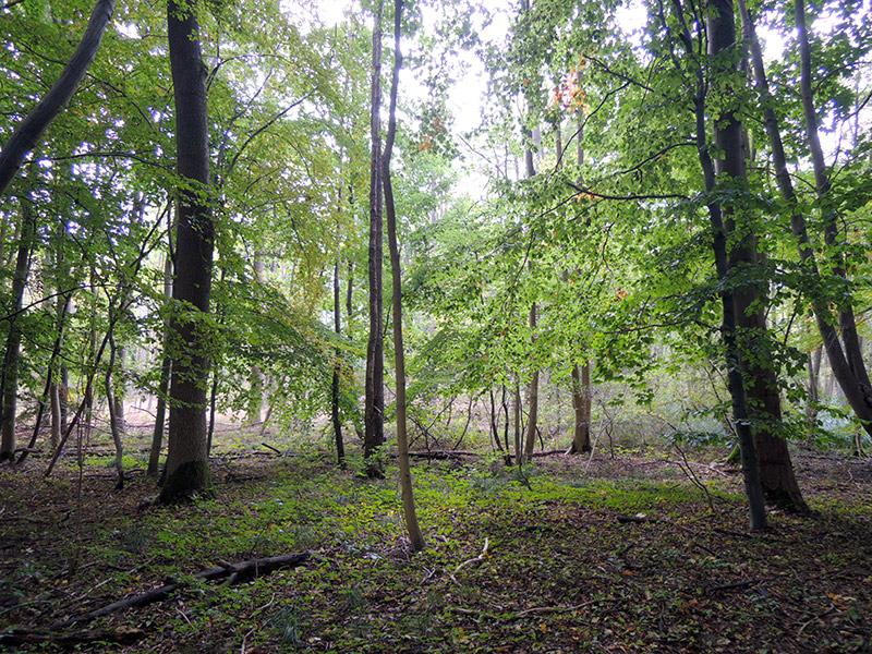 Im Wald – Schelfwerder
