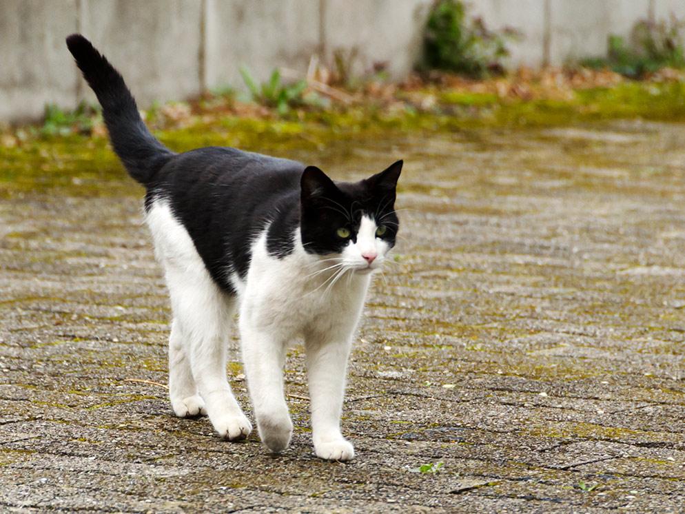Katze 1